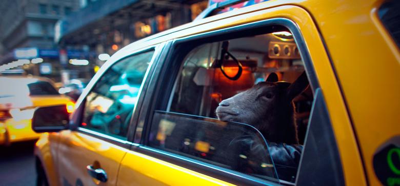 Картинки, картинки с машинами такси смешные