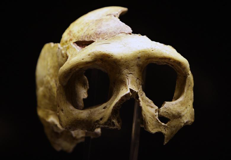 Палеоантропологи назвали причину вымирания неандертальцев