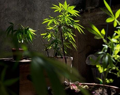 Сколько можно выращивать марихуаны в испании евгений конопля