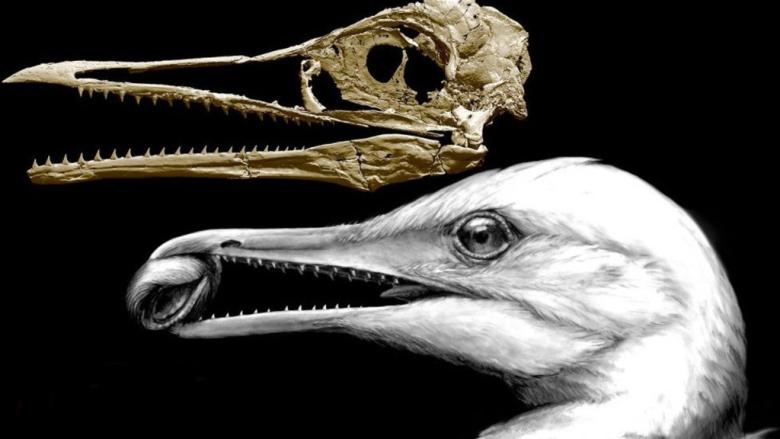 Ученые отыскали сходства у старинных ихтиорнисов и актуальных насегодняшний день птиц
